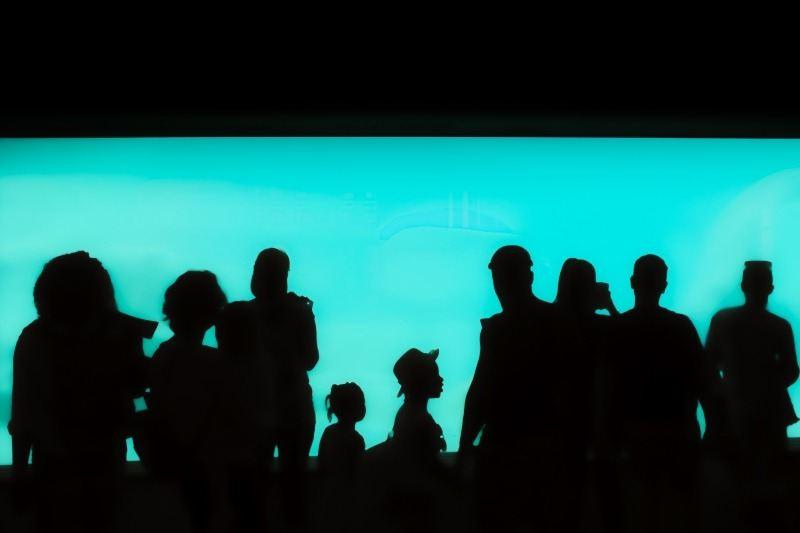 Aquarium-Silhouettes